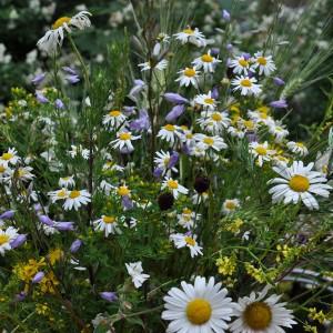 gardening-strauss2